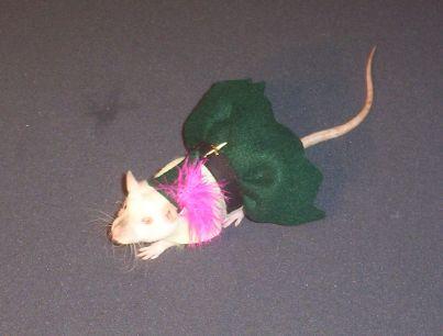 Pet Rat Clothes
